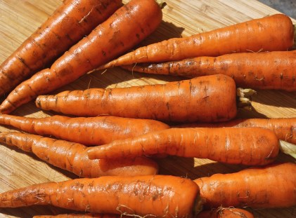 Bunch of Small Carrots, Scrubbed.