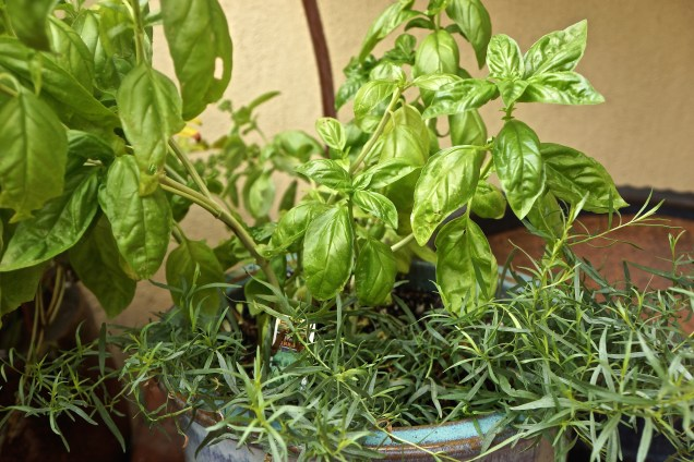 I grow basil and tarragon, so I use these. It's important that the herbs are really fresh if you want the perfect flavor.