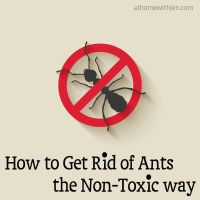 How to get rid of ants the non-toxic way!