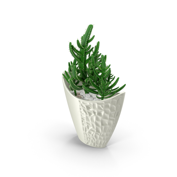 Small White Plant Pots Cactus In Pot Png Images & Psds For Download | Pixelsquid