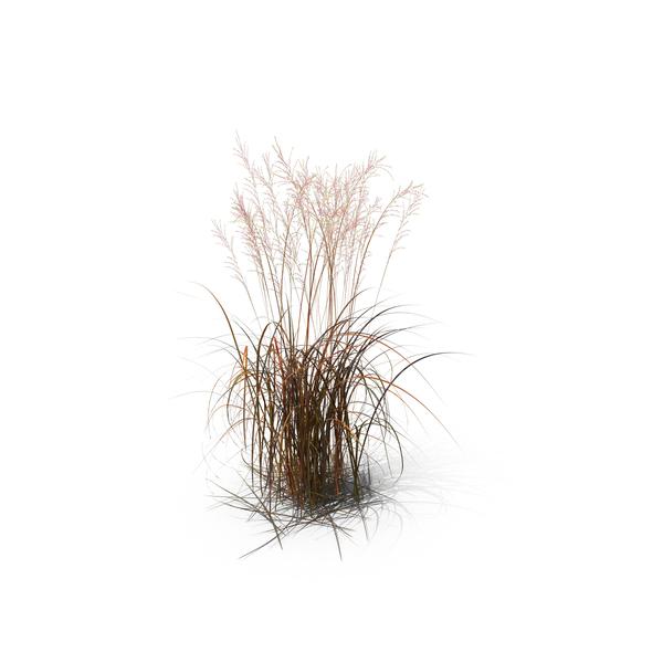 brown ornamental grass