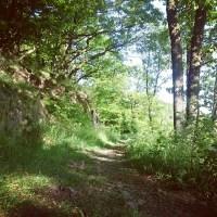 trail_hohenstein