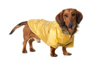 Dachshund Clothing Guide to Pamper Your Dog