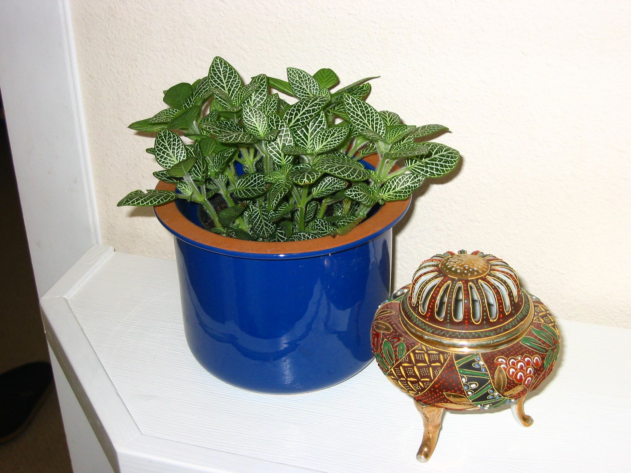 Indoor Small Plants My New Indoor Plants A Transplanted Gardener