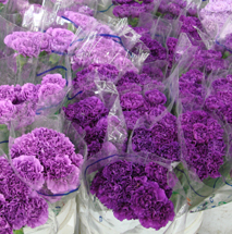2_chrysanthemumspurple-213x215