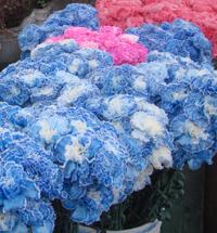 4_carnationsblue-200x215
