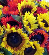 5_sunflowersgold-and-orange-215h