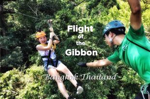 泰國曼谷最高級叢林飛索Flight of the Gibbon半日遊kkday曼谷唯一