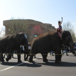 The elephants parading in front of the capitol to usher in the circus.