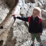 Cooper touching a dinosaur bone fossil.