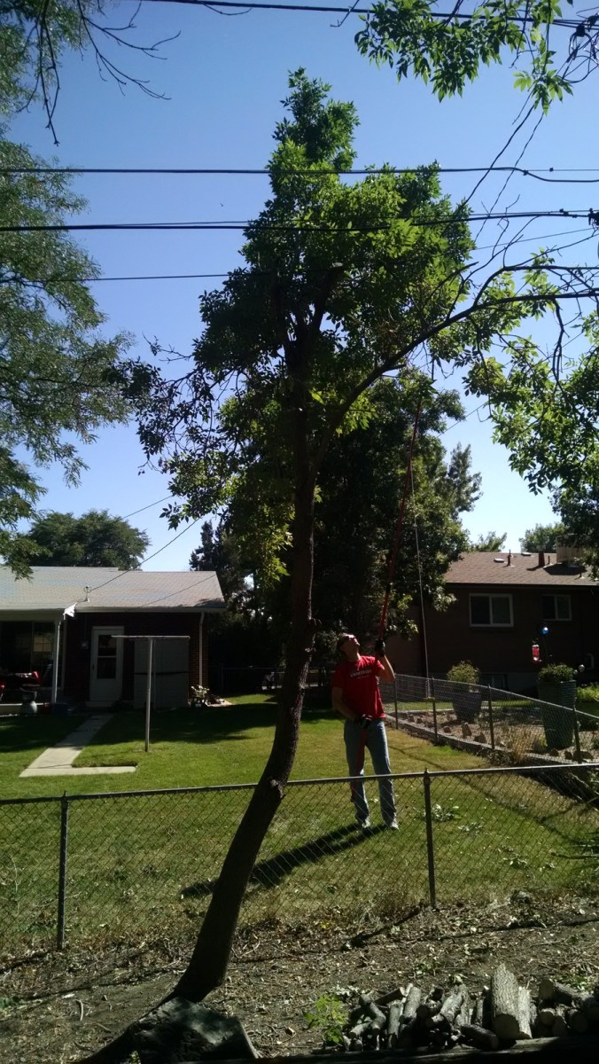 We've waited for the power company's tree trimmers to make it to our neighborhood for years and they finally came making it so we could safely take two ill placed trees out of our yard.