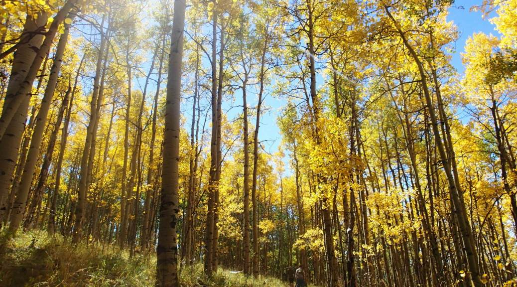 We had perfect timing with our camping trip. The trees were all decked out in fall glory.
