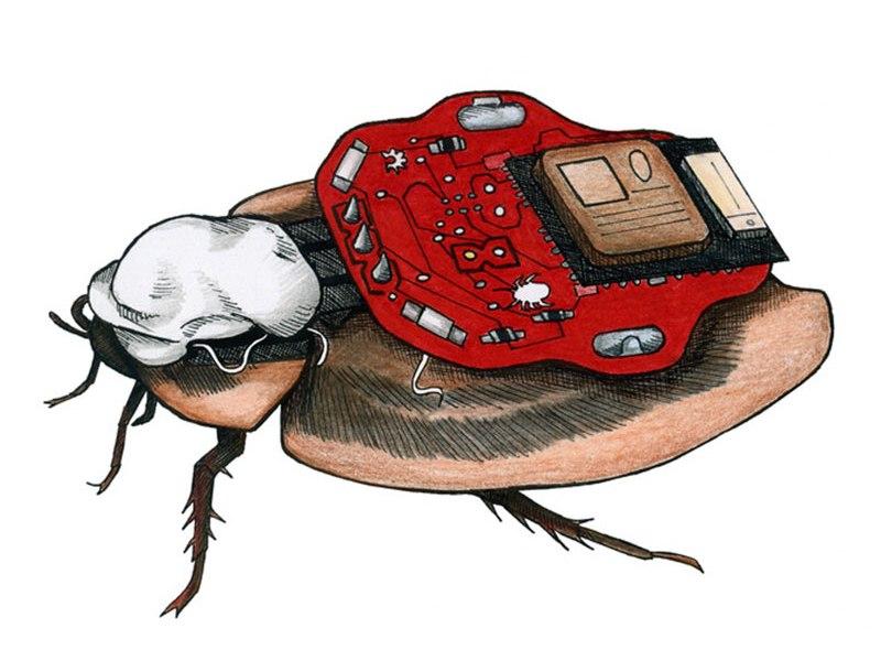 Steruj karaluchem dzięki Roboroach