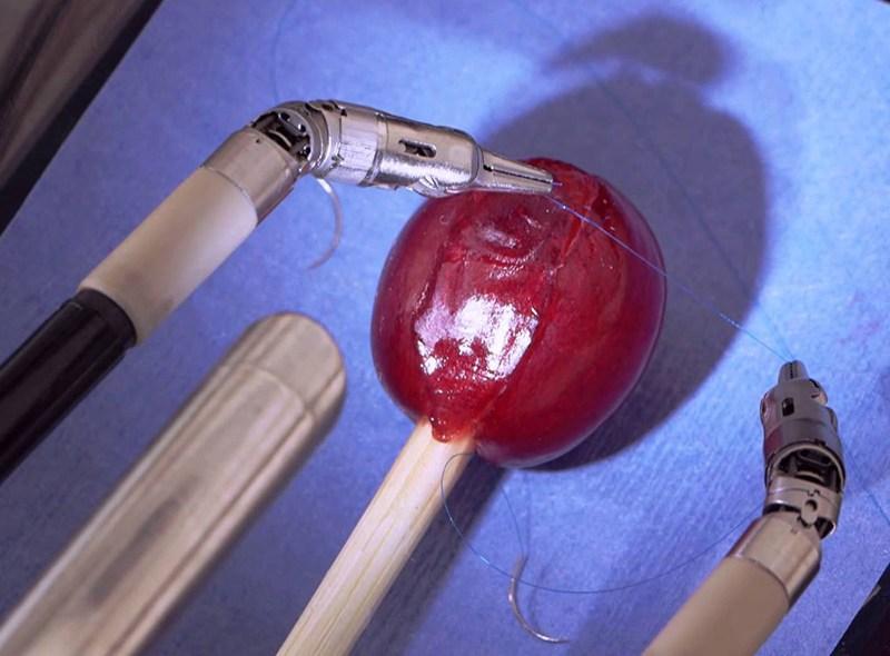 Robot zszywający winogrono