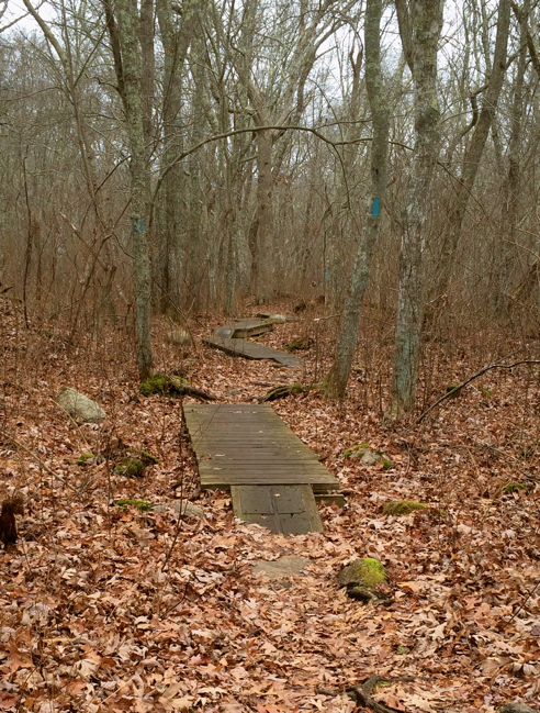 boardwalks on the north-south trail