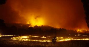 Canberra-bushfires-padock-fire