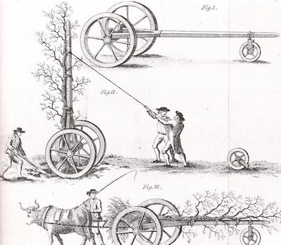 tree-moving-1794-hayes