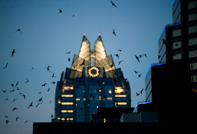 congress bridge bats colony mexican free-tail flying mice frost bank tower