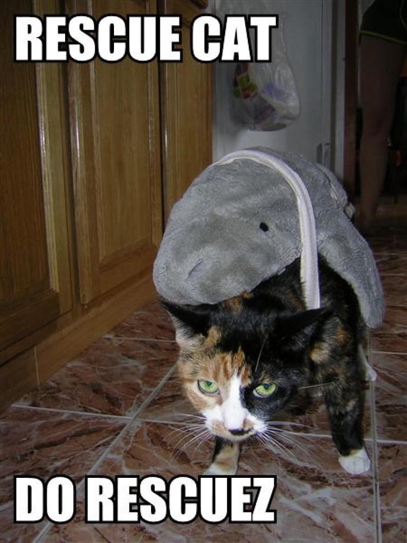 rescue_cat
