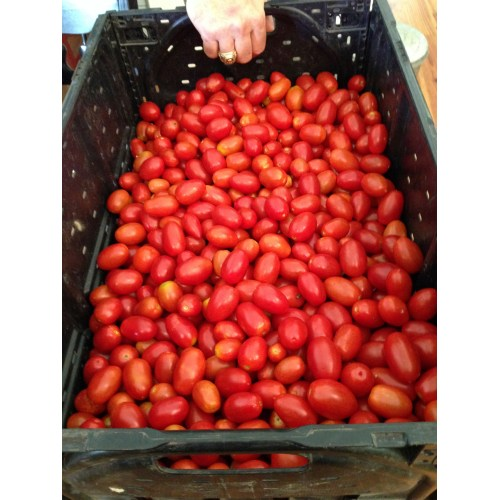 Medium Crop Of How Many Tomatoes In A Pound