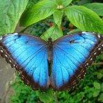 Con Autismo de Oruga a Mariposa