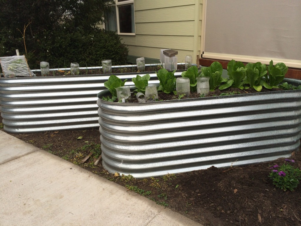 Iron Beds Australia Corrugated Iron Garden Beds Geelong Raised Ballarat