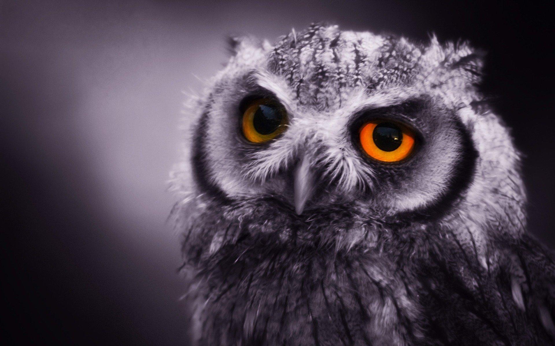 animal pictures for desktop backgrounds animal desktop wallpaper 17 download