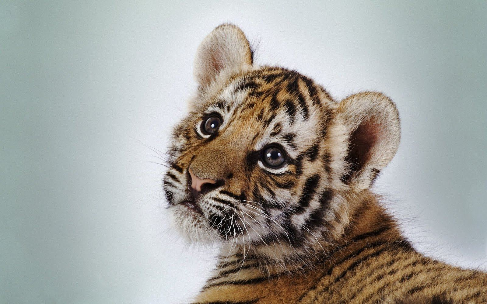 Animal Wallpaper Download Hd Cute Baby Animal Backgrounds Pixelstalk Baby Animals