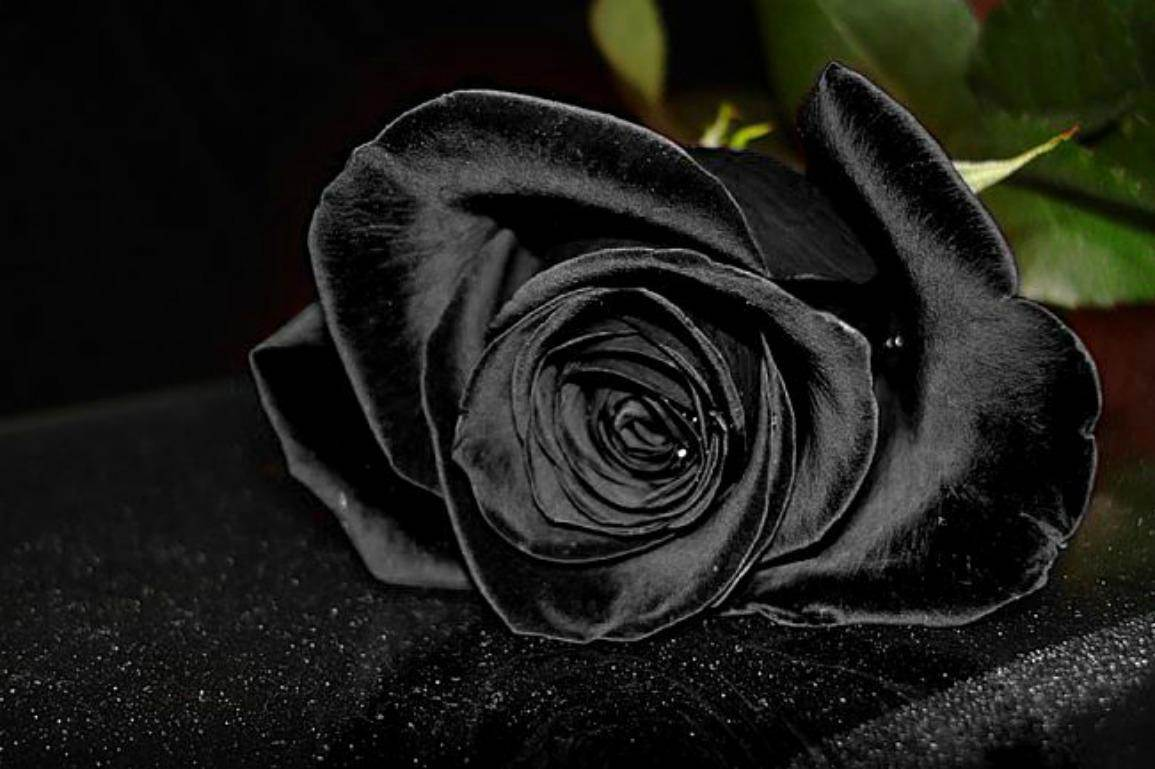 3d Rose Wallpaper Apps Black Rose Images 62 Wallpapers Adorable Wallpapers