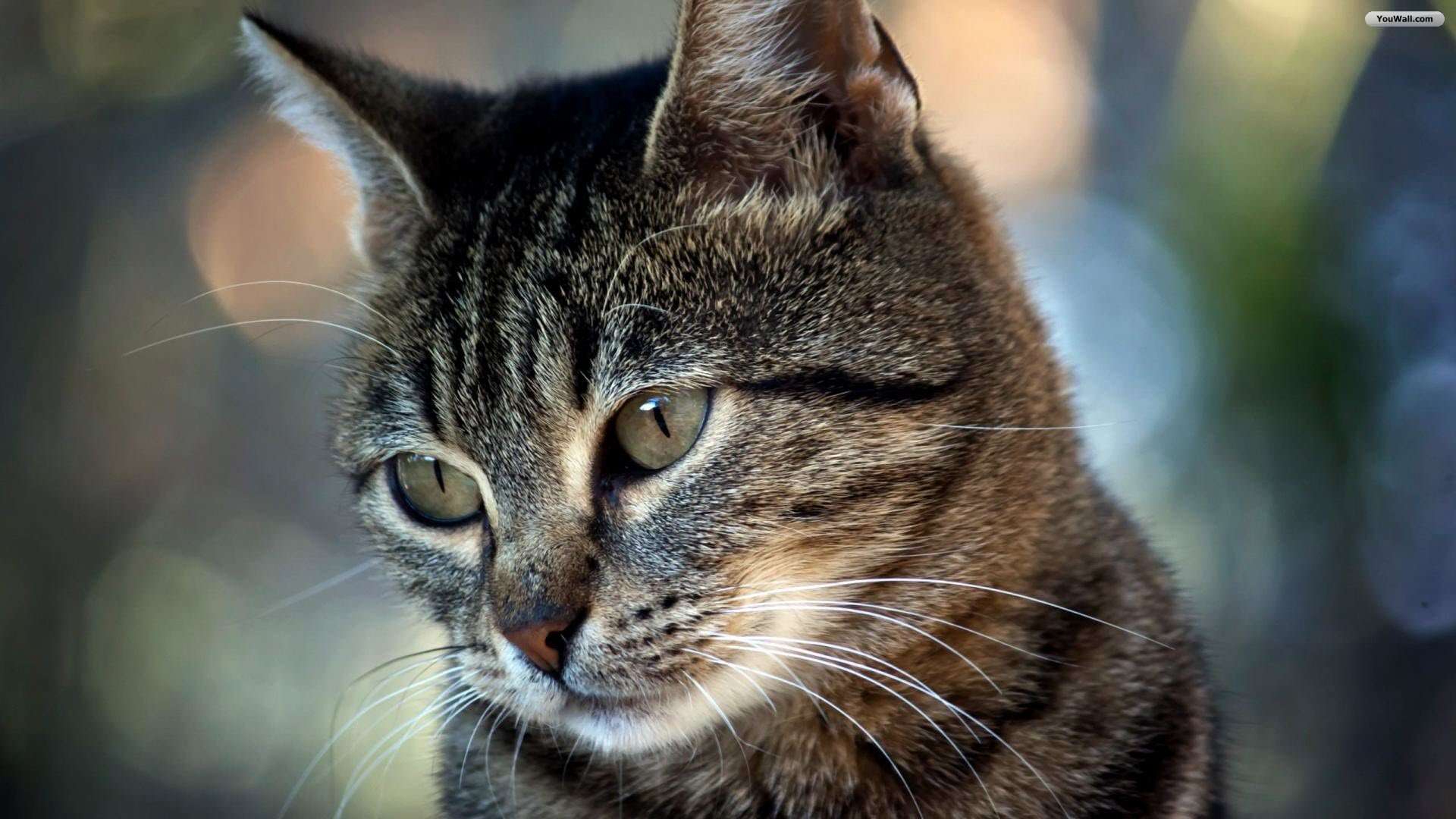 Cute Kitty Wallpapers Download Cat Wallpapers 1920 215 1080 58 Wallpapers Adorable Wallpapers
