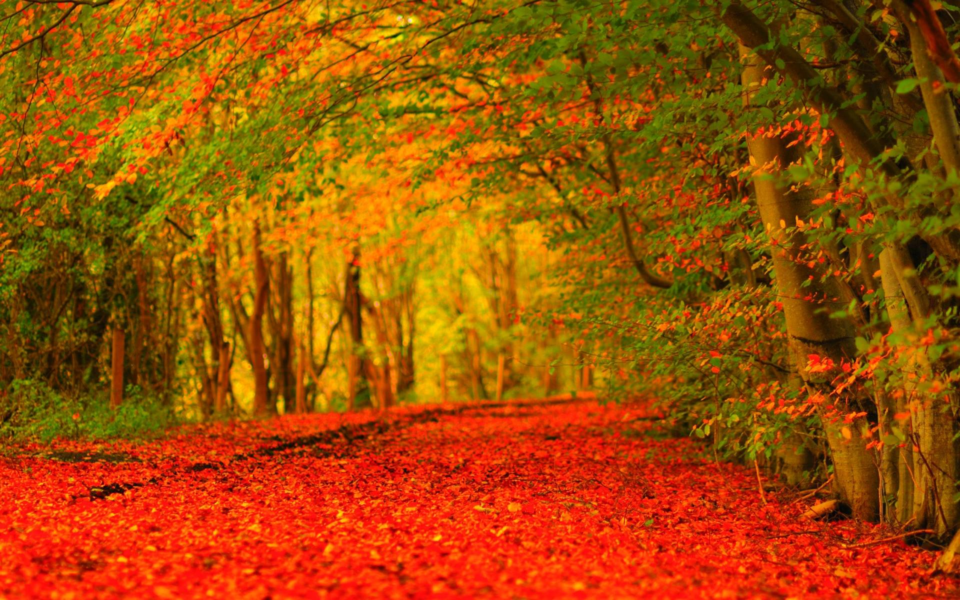 Free Desktop Wallpaper Fall Foliage Fall Themed Desktop Backgrounds 36 Wallpapers Adorable