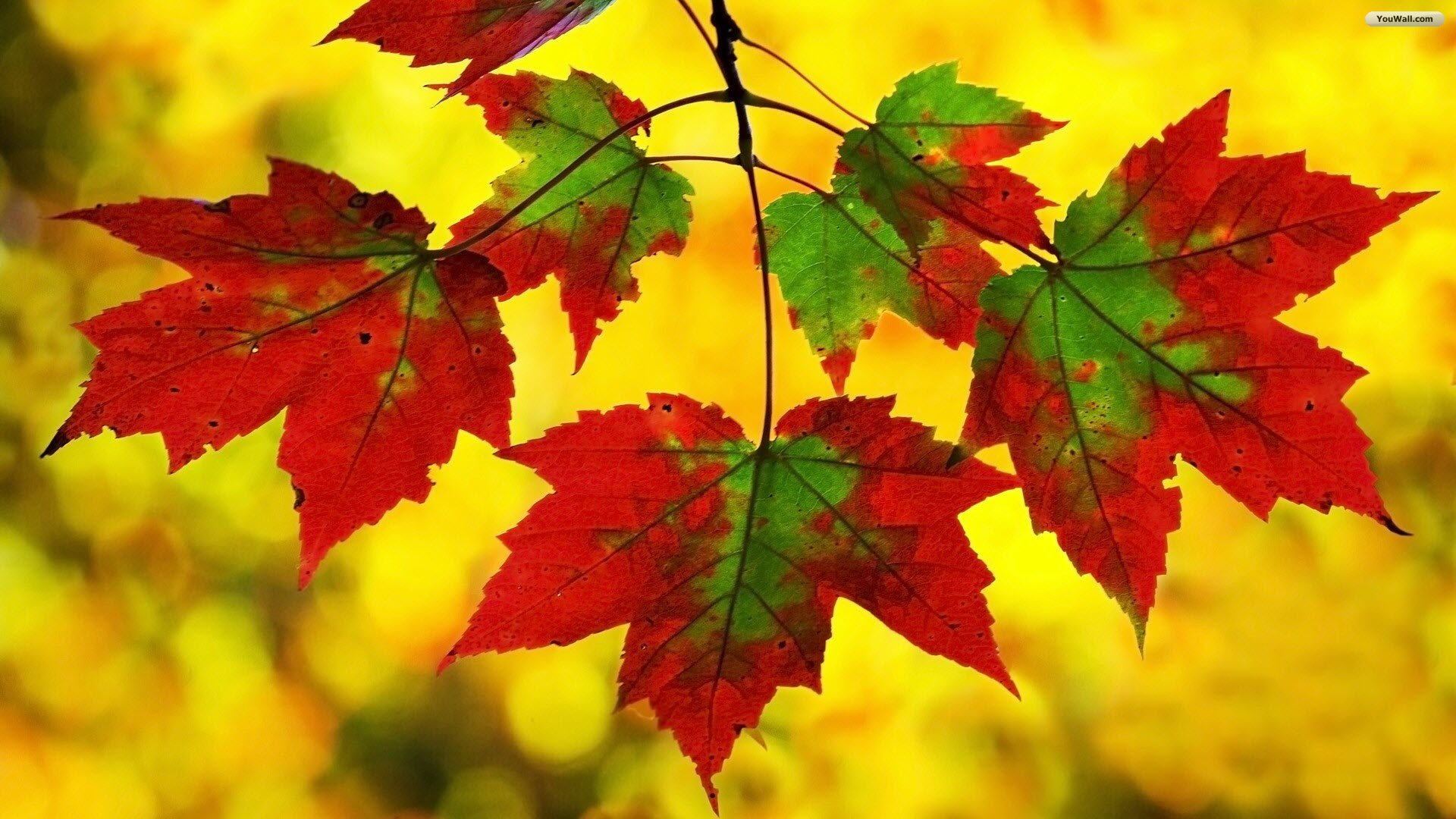 Fall Android Wallpaper Android Wallpaper Fall Colors 1920x1080