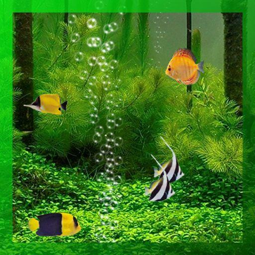 Lighthouse 3d Live Wallpaper Live Fish Wallpaper For Desktop Download 33 Wallpapers