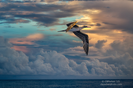 Sunrise Flight - At Sea, Solomon Islands