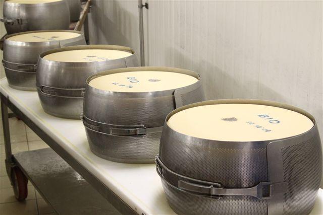 Parmigiano Reggiano Moulds
