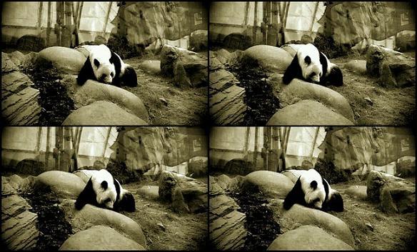 Ocean Park Panda ActionSnap