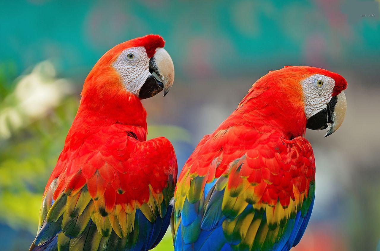 Exotic Animal Wallpaper Guacamayo Macao Aves Ex 243 Ticas