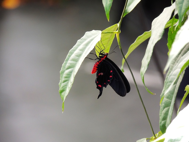 The butterfly exhibit in the Botanical Gardens.