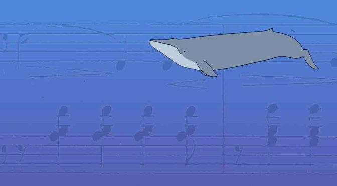 lonely 52 hertz whale