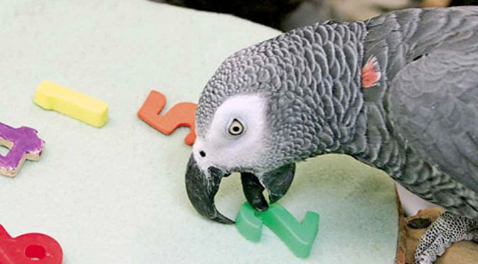 Alex The Genius Parrot – A Touching Tale