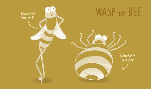wasp vs bee