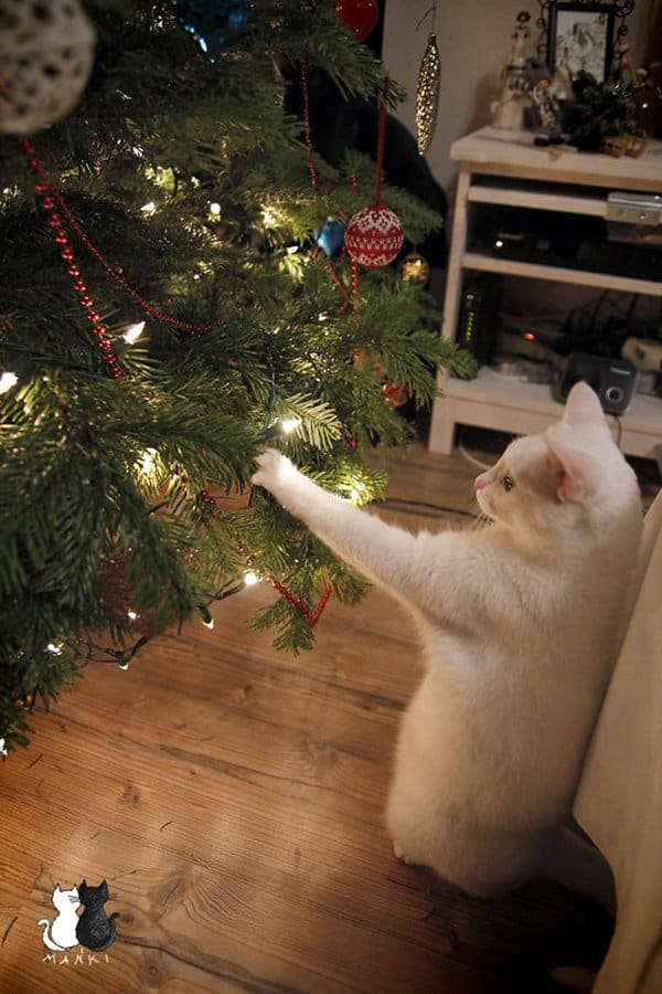 Kerstboom Grappig 14 Cats 'helping' To Decorate Christmas Trees - Part 1