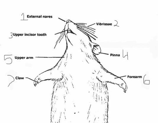 diagram of body cavity