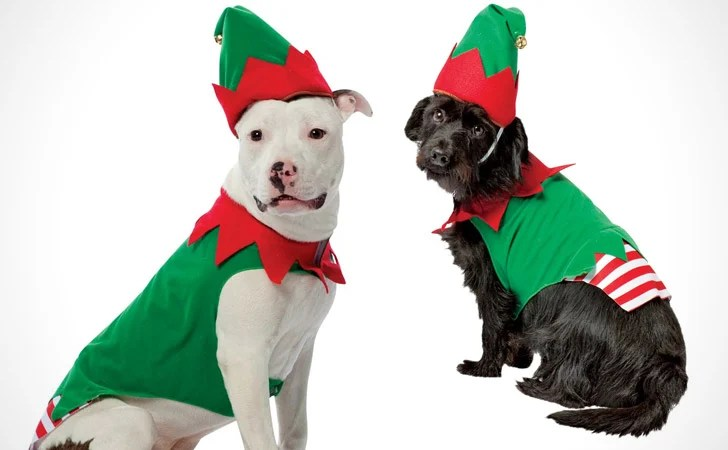 55+ Cool Pet Costumes For Dogs Of All Sizes ( Dog Costume