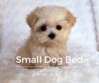DIY Small Dog Bed 24w x 17d  A World of Furry Friends