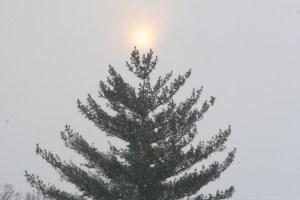 xmas tree star