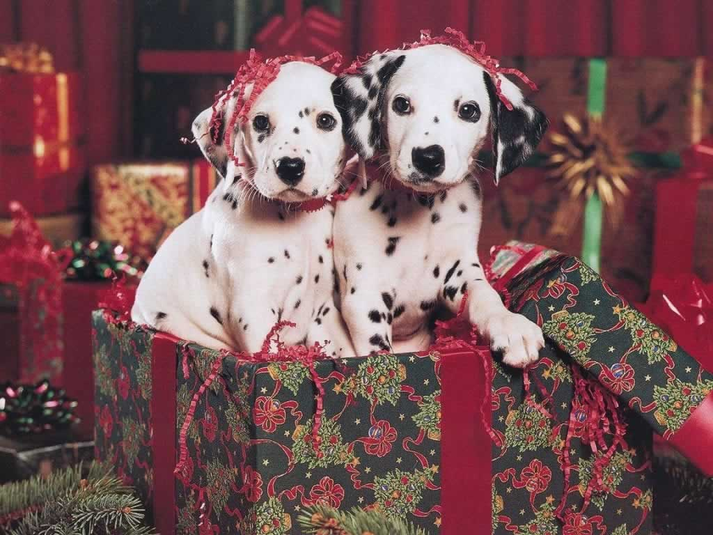Cute Dog Christmas Pics Wallpaper Christmas Animals Photos 2014 نجوم مصرية
