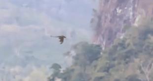 فيديو تنين يطير
