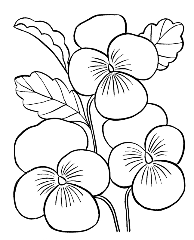 Sketsa Anggrek Flower Coloring Pages For Adults - Az Coloring Pages