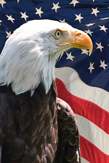 Eagle head with USA Flag v1